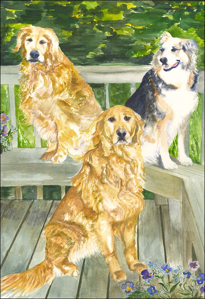 Anne's-Dogs-Posing-on-the-deck,-Golden-Retrievers,-Australian-Shepard