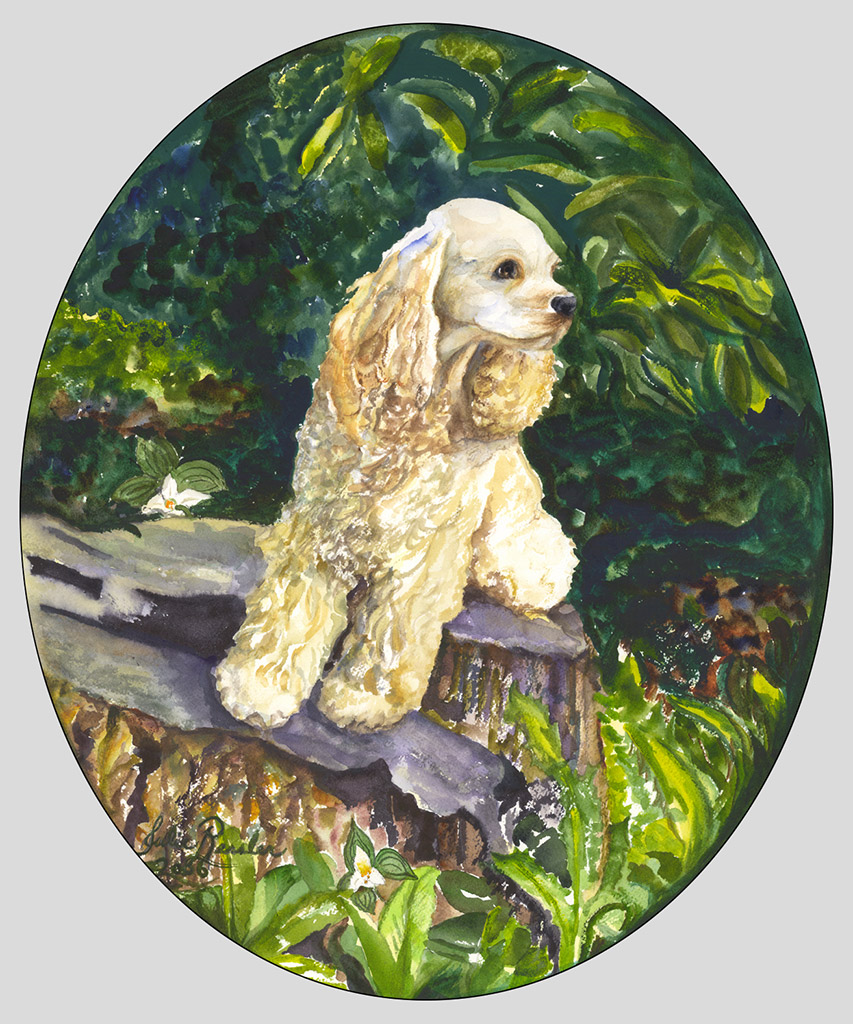 Clancy-Cocker-Spaniel