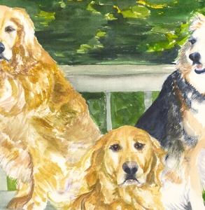 Anne's-Dogs-Posing-on-the-deck,-Golden-Retrievers,-Australian-Shepard