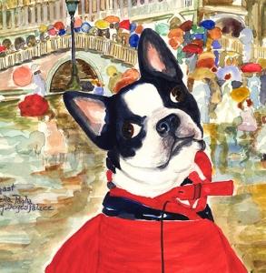 Jerry's-New-Raincoat-Boston Terrier