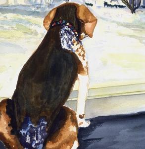 Nilly-Beagle