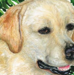 Rizzo-Golden-Labrador-Retriever