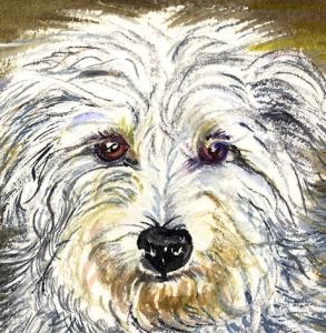 Willie-dog-unknown-pedigree