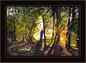 forest-dawn